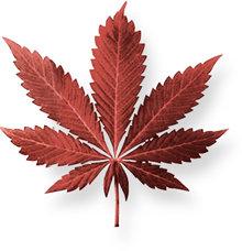 La marihuana es una mezcla de hojas, tallos, flores y semillas secas de la planta del cáñamo índico. Tiene un color normalmente verde, marrón ogris.